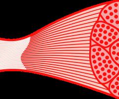 curso funciones musculares UEMC