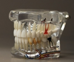 Técnicos Superiores en Prótesis Dentales
