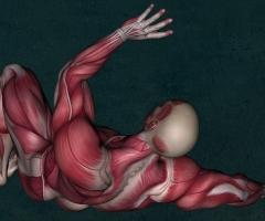 curso anatomia UEMC
