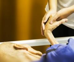 curso cuidados paliativos UEMC