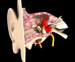 Técnicos Superiores en Audioprótesis
