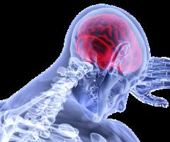 brain-3168269__340
